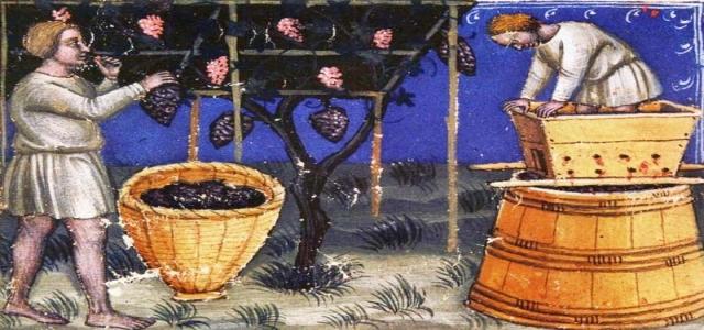 Средневековые виноградари и террасы